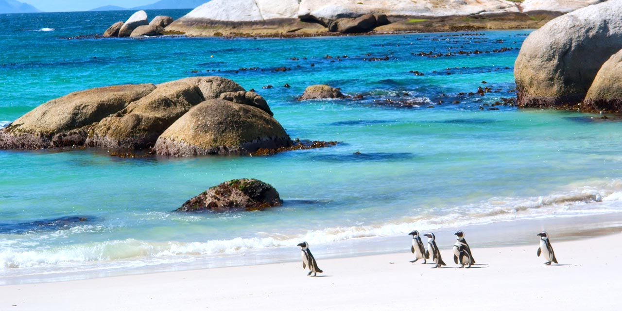 cape town penguins — south africa