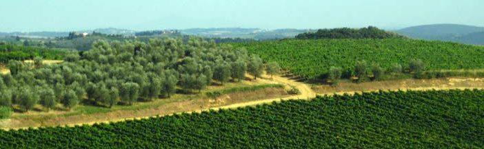 Vitigni_in_Toscana