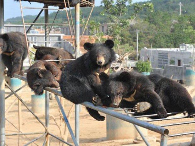 bear-farm
