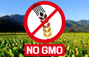 gmo_no_field_taro-735×350-1