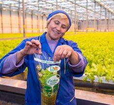 Минская овощная фабрика: витаминная продукция круглый год