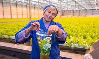 Минская овощная фабрика